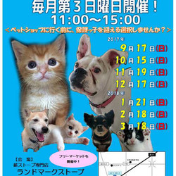 静岡県富士市にて「第三回定期犬猫譲渡会」
