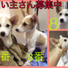 愛媛県動物愛護センターから引き出した仔犬の女の子 サムネイル5