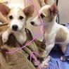 愛媛県動物愛護センターから引き出した仔犬ちゃん サムネイル3