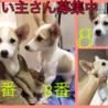 愛媛県動物愛護センターから引き出した仔犬ちゃん サムネイル4