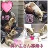 愛媛県動物愛護センターから引き出した仔犬ちゃん サムネイル5