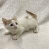 愛護センター引き出し子猫です。 サムネイル2
