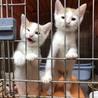 愛護センター引き出し子猫です。 サムネイル7