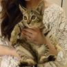美猫キジ姫あかねちゃん サムネイル4