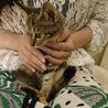 美猫キジ姫あかねちゃん サムネイル6