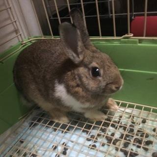 可愛い子ウサギさん