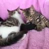 抱っこ大好き、甘えん坊のロロ君。 サムネイル5