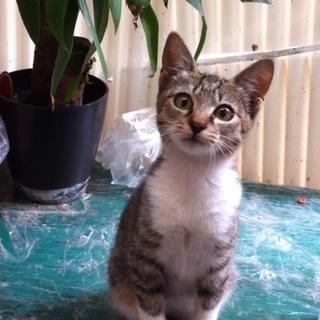 まだ幼く、頭の賢いお話する猫ちゃんです。