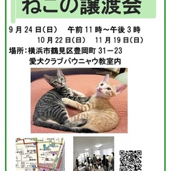 つるみ・猫のカギしっぽ譲渡会vol.38   鶴見駅歩5分室内開催