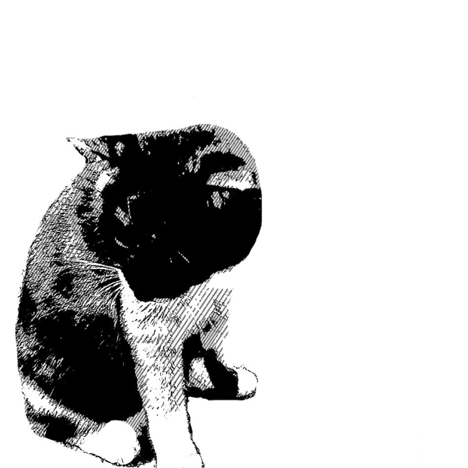 ピコ(ぴっちゃん)のカバー写真