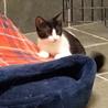 白黒 姉妹子猫です。元気でかわいい(ノ≧▽≦)ノ