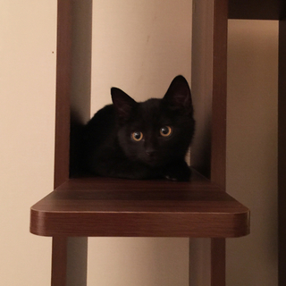 かわいい黒猫女の子。ちょい短足。