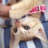 猫三兄妹ママ さん