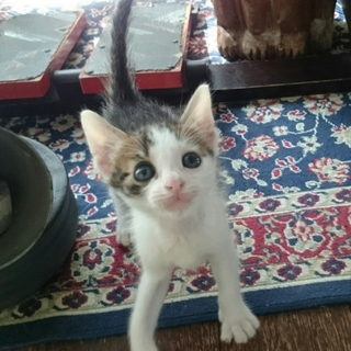 世界猫の日に保護されたラッキー仔猫ちゃん