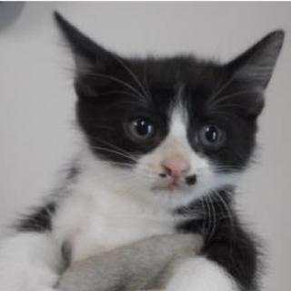里親さんを待っています。子猫 ♂白黒