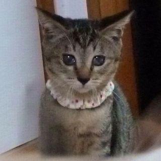 和猫のゆめかちゃん