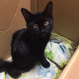 人懐っこい黒猫くんです!