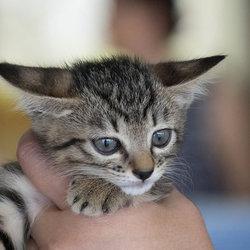 10月7日(土)三好ネコの会「猫の譲渡会」・愛知県みよし市