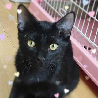 美形の黒猫☆5ヶ月半 トド松くん