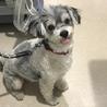 安楽死希望で持ち込まれた犬、ルビーちゃん7歳
