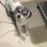 安楽死希望で持ち込まれた犬、ルビーちゃん7歳 サムネイル3