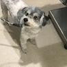 安楽死希望で持ち込まれた犬、ルビーちゃん7歳 サムネイル4
