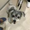 安楽死希望で持ち込まれた犬、ルビーちゃん7歳 サムネイル7
