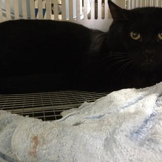 時間がありません 甘えん坊の黒猫くん