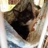 黒白子猫のまみちゃん サムネイル3
