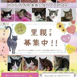 保護犬・保護猫譲渡会★in倉敷
