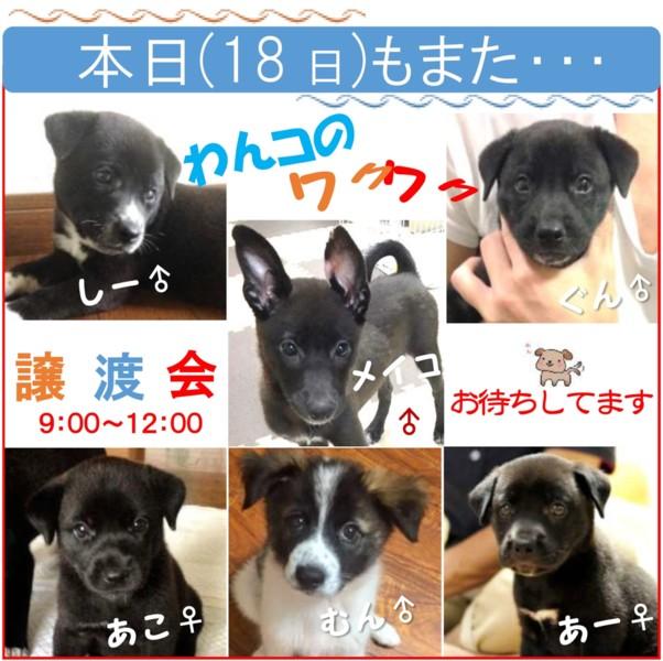 保護 犬 譲渡 会 ピースワンコは、保護犬の ... - 保護犬譲渡会