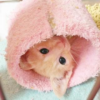 健康的な茶トラ仔猫くん