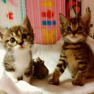 最後のお願い、ママと子猫2匹一緒に