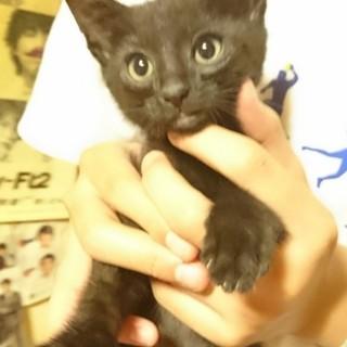 2ヵ月の黒猫ちゃん(男の子)