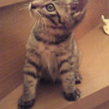 保護猫のうちの一匹チャコ。良い里親さんの元へ。