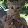 武士な女の子猫ちゃんです。
