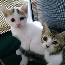 名古屋市西区円頓寺 9月24日(日)第71回リトルパウエイド猫の譲渡会