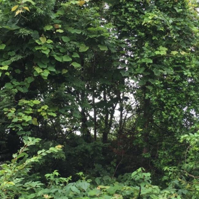 森の住人のカバー写真
