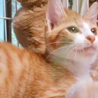 遊ぶのが大好き、目がきれいな子猫(4ヶ月)オス