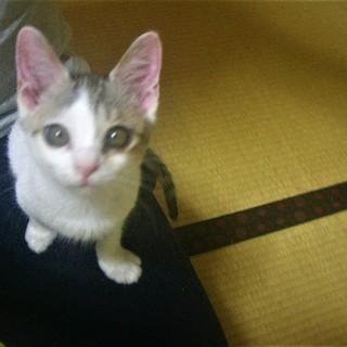 ^ↀᴥↀ^<動画あり♪ 子猫 サバシロ 鯖白 雄
