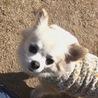 スリール〜犬達の幸せ探し〜(保護活動者)