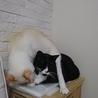 はなまるの寝姿がアクロバティックすぎて困惑。そして、それを受け入れて熟睡のクックにも困惑。君たち、仲良しすぎです!(笑)
