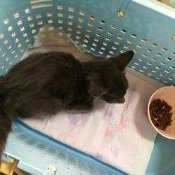 捕獲した子猫を病院へ