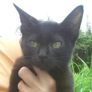 至急!  黒猫