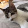 袖猫のミミィちゃん サムネイル4