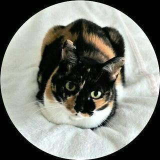 The 三毛猫 !! 美しいあきちゃん