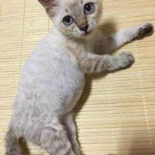 美人ネコちゃん