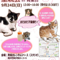 【おーあみ避難所】♪仔猫祭り♪里親会開催!