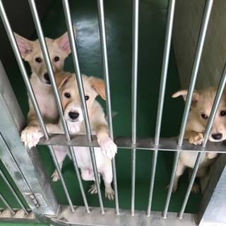 県外の方もお願いします!4ヶ月の子犬3匹女の子