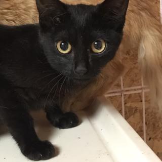 黒猫のおんなのこ☆バナナちゃん
